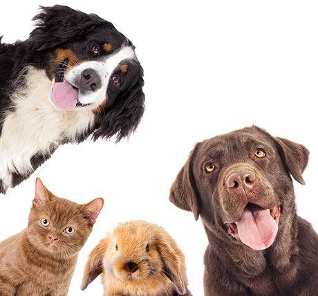 Veterinarian and animal hospital in Ormond Beach, FL