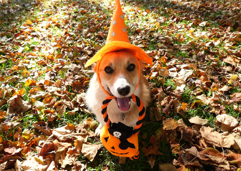 How to Have a Safe Howl-o-ween!