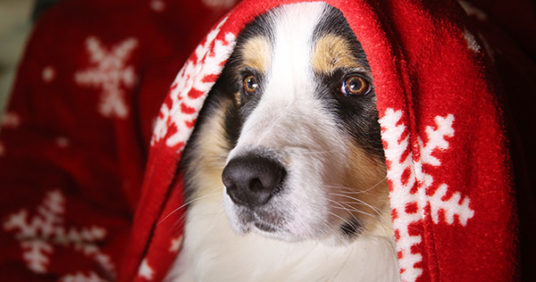 How to Safely Enjoy the Holidays with Your Pets