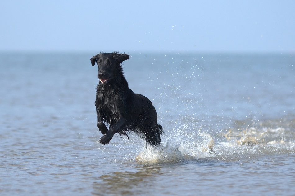 Water Safety Tips for Pets