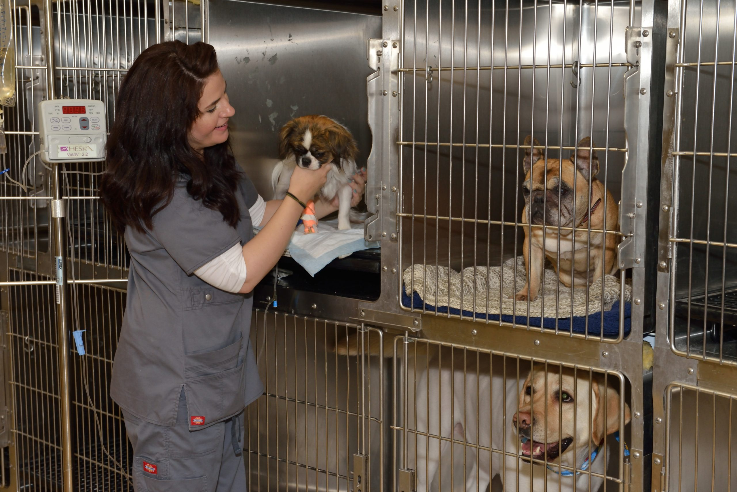 Cat and dog medical boarding in Ormond Beach, FL