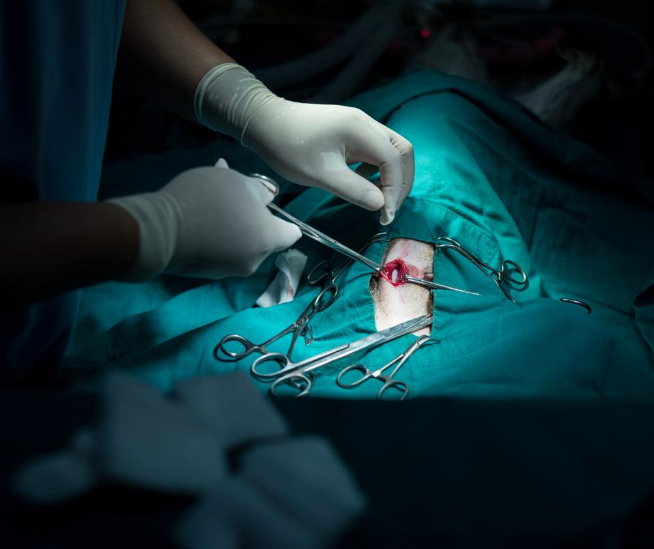 Veterinary surgery in Ormond Beach, FL