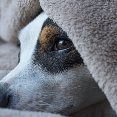 How to Prepare Your Pet Sitter for an Emergency