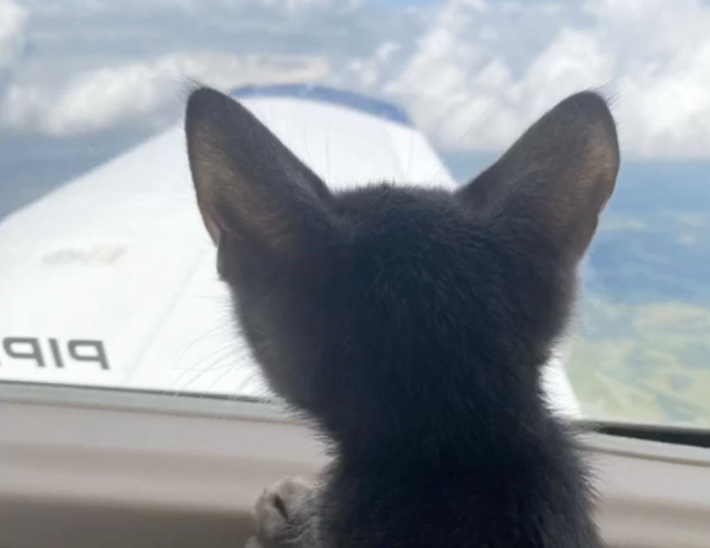 AEHV Sponsors Mission To Rescue Kittens From A High-Kill Shelter
